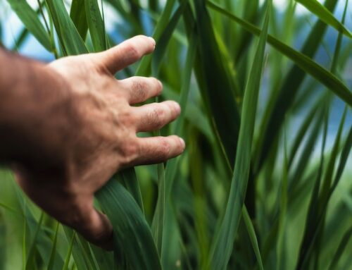 Establecimiento del criterio de proximidad al centro de trabajo para el empleo agrario