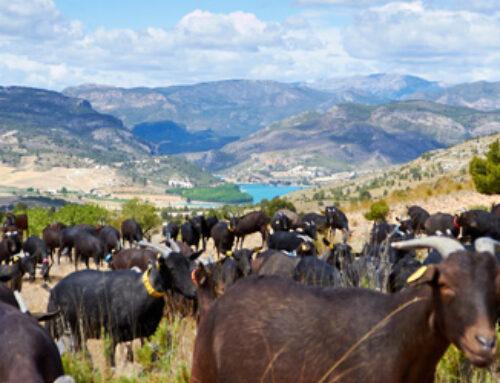 Cantero de Letur: las claves del éxito de esta empresa pionera en lácteos ecológicos